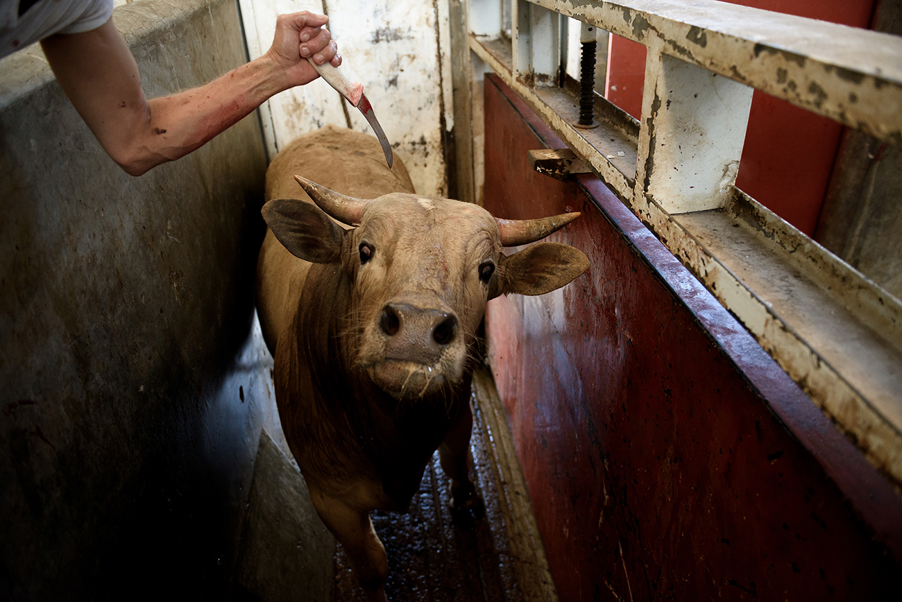 Searing Photos from the Frontlines of the Hidden War on Animals