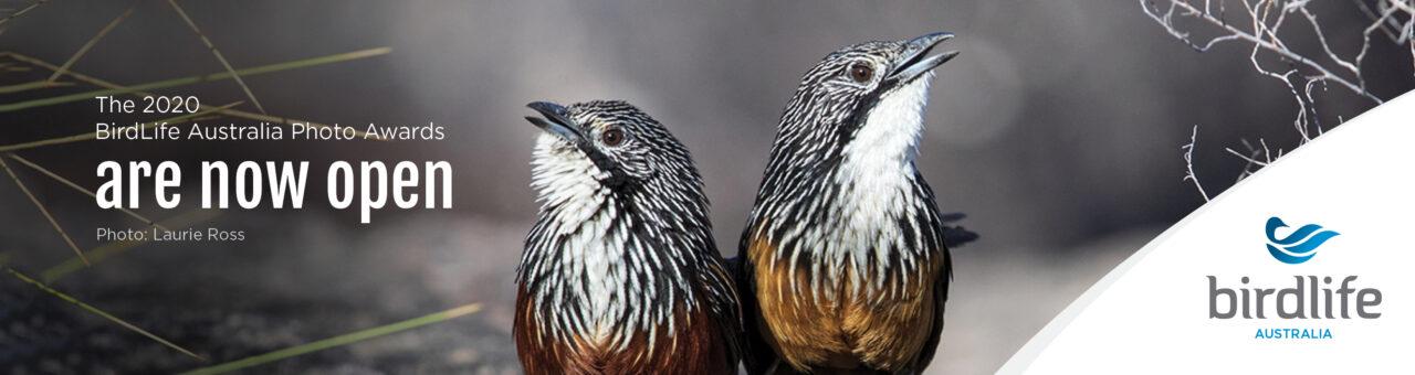 The BirdLife Australia Photography Awards Celebrates Conservation