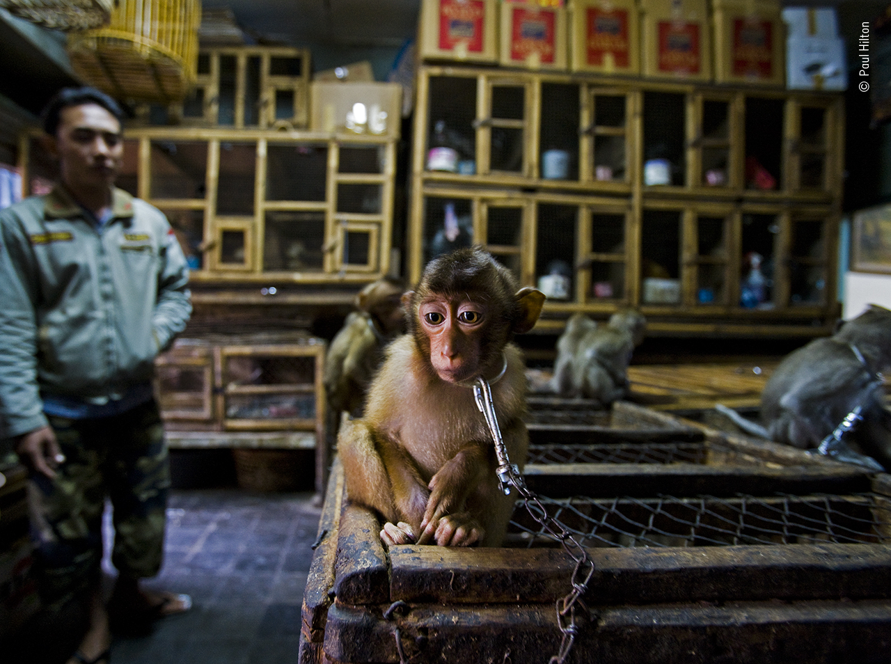 Unflinching Photojournalism from Wildlife Photographer of the Year 2020
