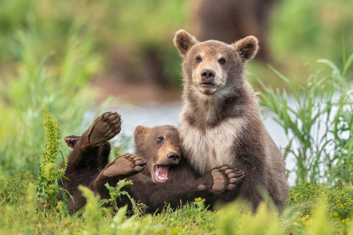 Need a Laugh? Check Out the Finalists of the 2020 Comedy Wildlife Awards